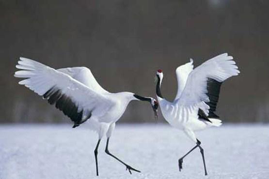 10 عکس بینظیر از حیات وحش