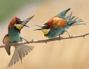 زن و شوهر دعوا کنند و...!
