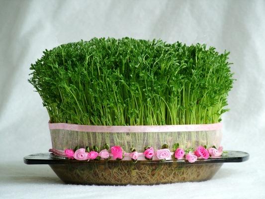 آموزش سبز کردن عدس و مراحل رشد آن