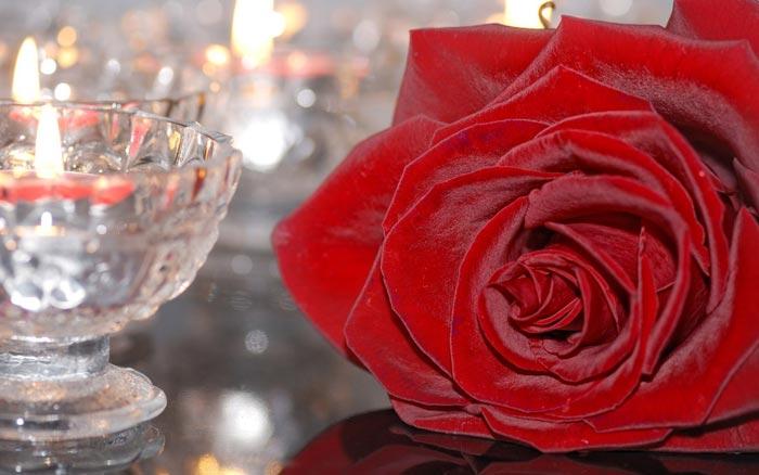 20 تصاویر تزئینات فوق العاده زیبا با گل رز