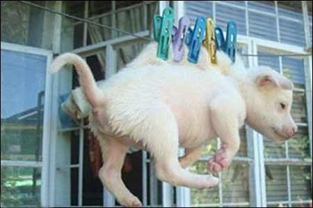 215493 احکام آزار و اذیت کردن حیوانات از نظر شرعی