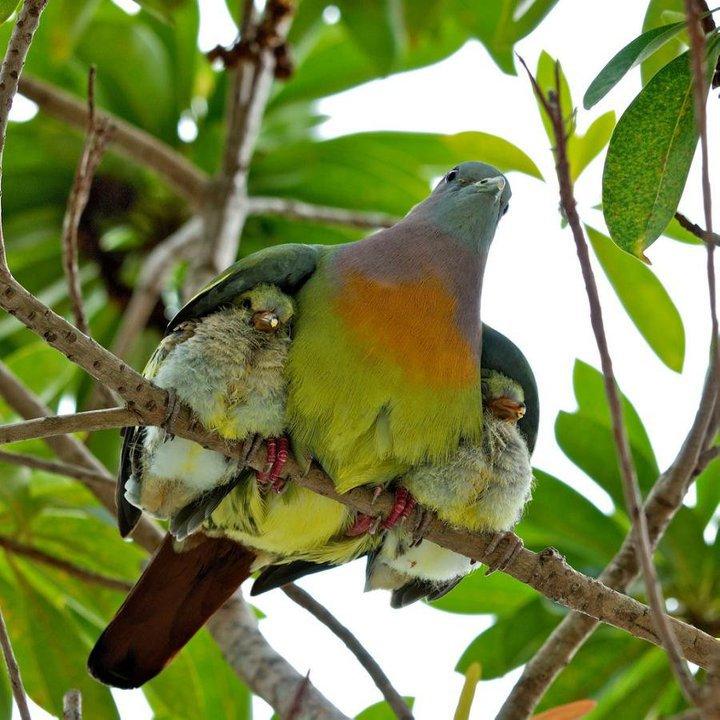 آرامش واقعی یک مادر /عکس