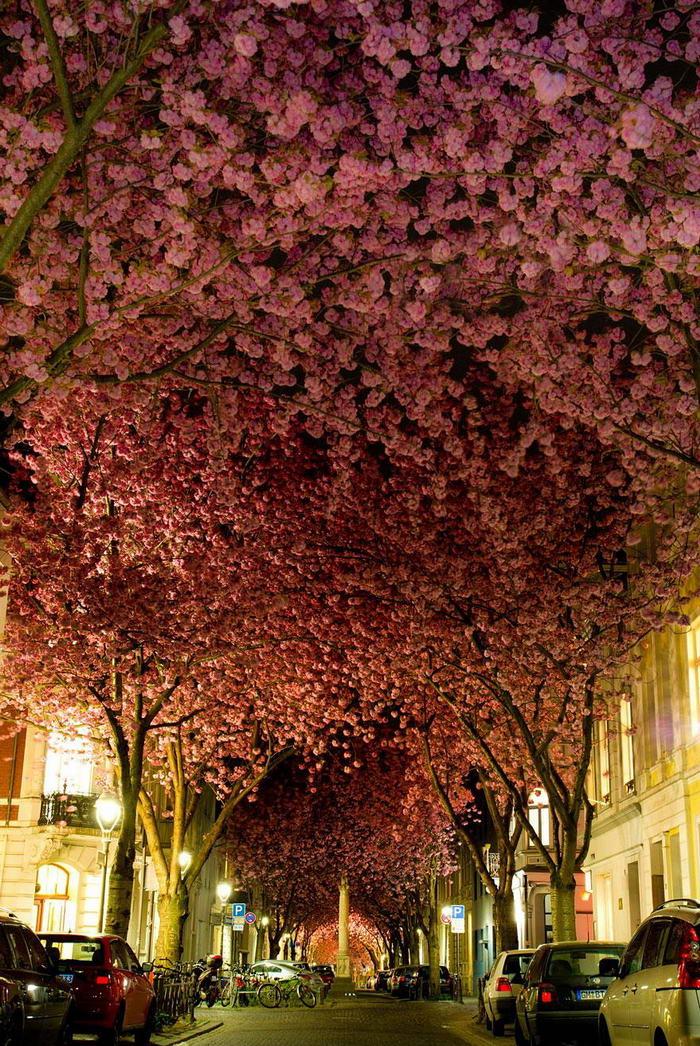 Street-in-Bonn