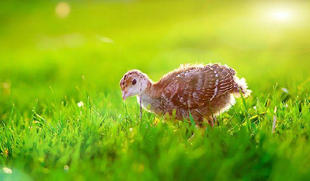 دنیای زیبای حیوانات