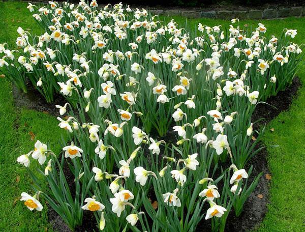 جشنواره گلهای لاله در هلند /تصاویر