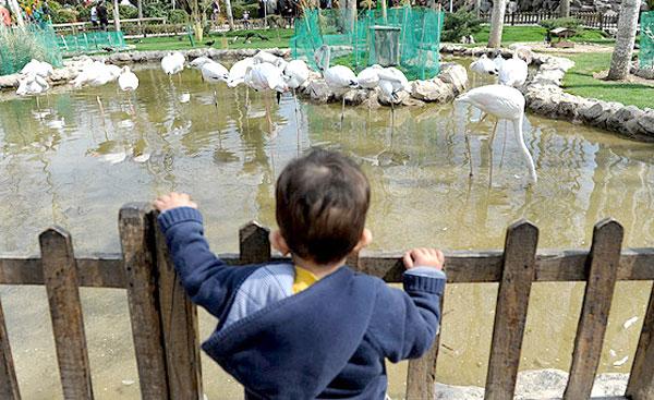 دیدنیهای باغ پرندگان اصفهان /تصاویر