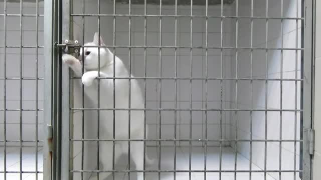 دانلود کلیپ دیدنی گربه باهوش