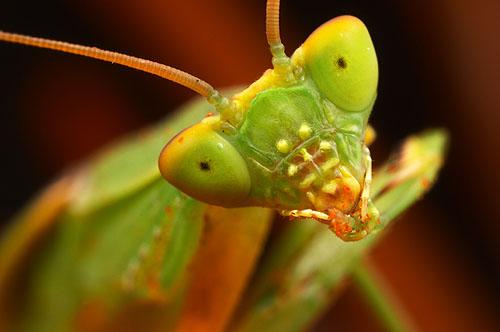 حشرات از نمای نزدیک /تصاویر