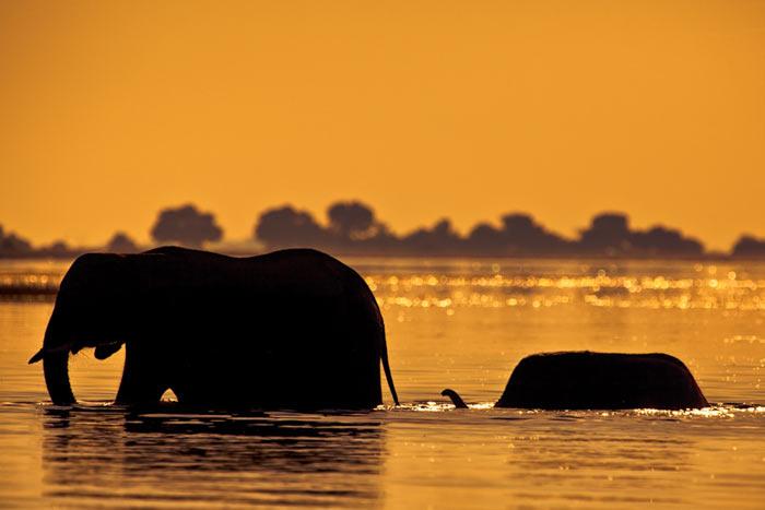 تصاویری از طلوع و غروب خورشید در قلمرو حیات وحش