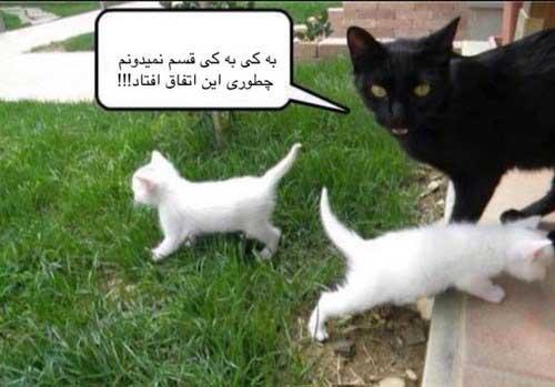 تصاویر طنز و خنده دار (5)