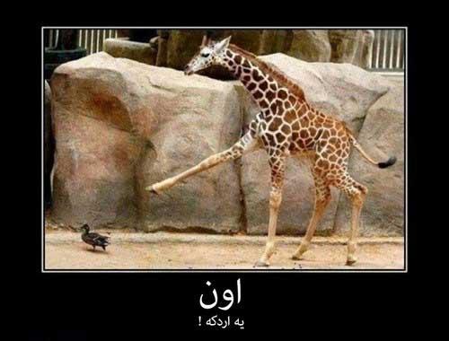 تصاویر طنز و خنده دار (3)