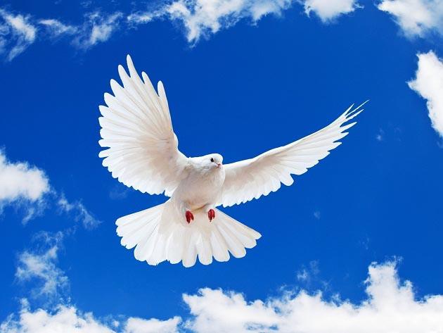 داستان عبرت آموز کبوتر