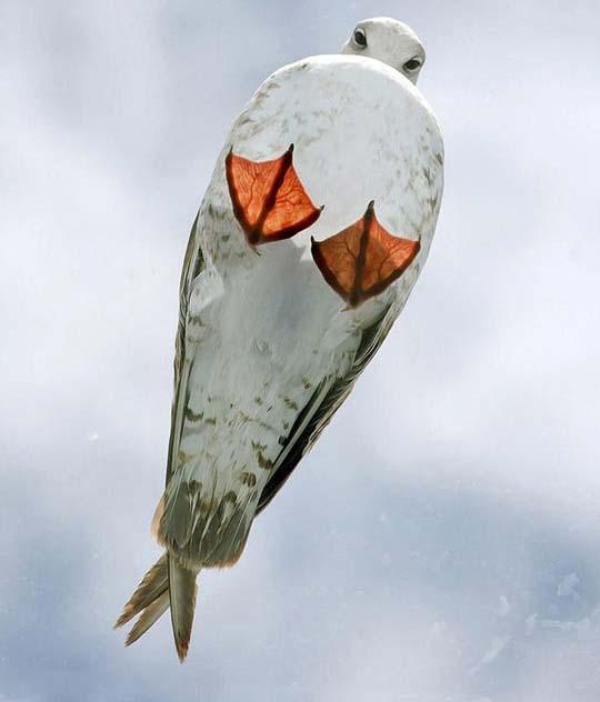 نمایی زیبا از یک مرغ دریایی /عکس