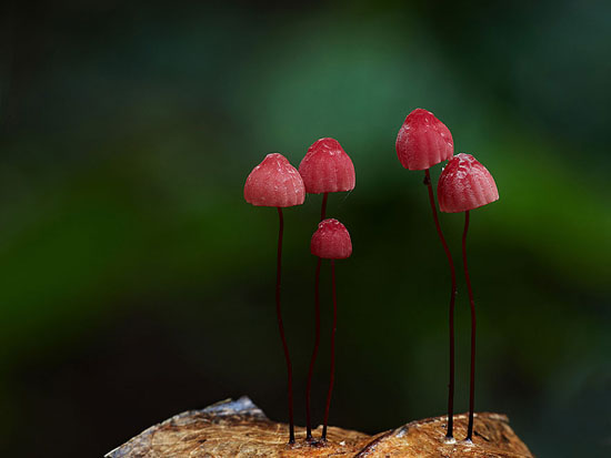 دنیای شگفت انگیز قارچ ها /تصاویر