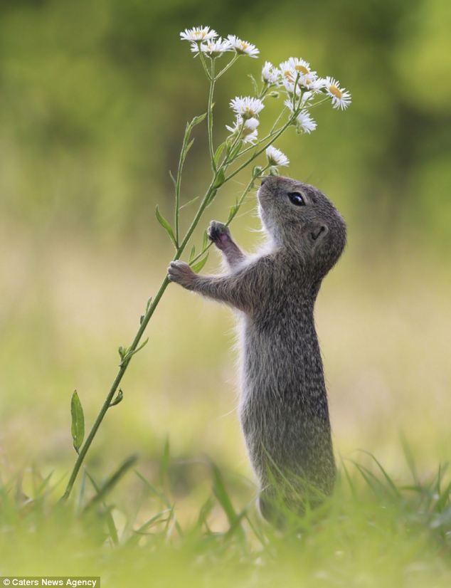 تصاویر جالب و دیدنی از یک سنجاب