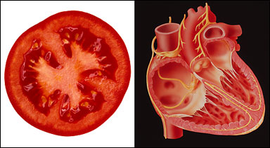 شباهت جالب میوه ها با اعضای بدن انسان +تصاویر