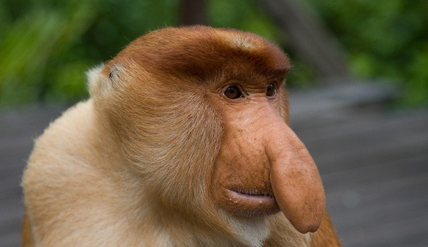 عجیب ترین حیواناتی که تاکنون ندیده اید! /تصاویر