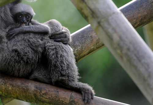 تصاویر جالب و دیدنی از حیوانات