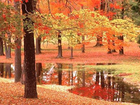 پاییز؛ بهاری که عاشق شده است