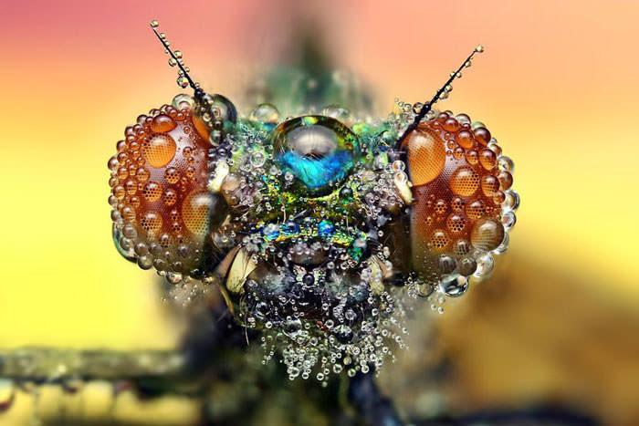 عکاسی ماکرو از حشرات بعد از باران