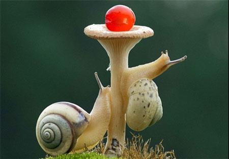 شکار لحظه ها: تصاویر فوق العاده زیبا از یک حلزون