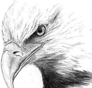 مرغابی یا عقاب! کدام می خواهید باشید؟