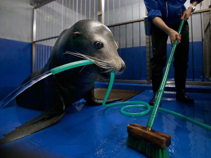 حیوانی که قفس خود را نظافت میکند + عکس