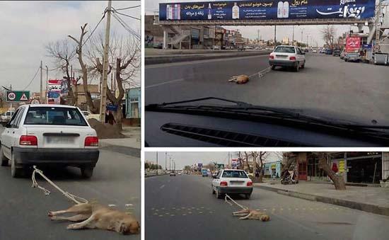 شدیدترین اذیت و آزار یک سگ در ایران! + عکس