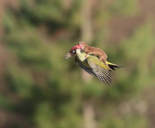یک اتفاق باور نکردنی در طبیعت + عکس