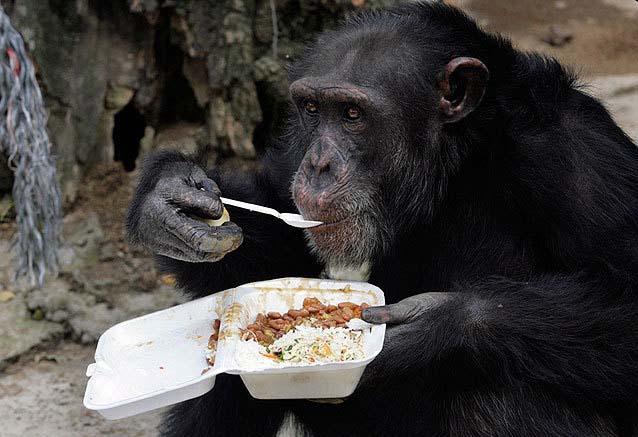عکس جالب و دیدنی از یک میمون