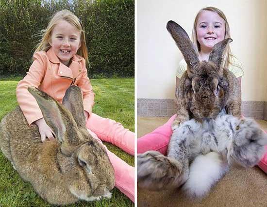 بزرگ ترین خرگوش دنیا + تصاویر