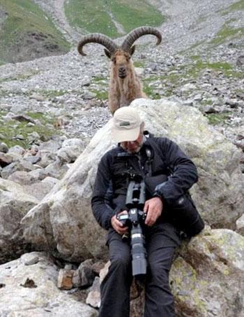 تصاویر جالب و دیدنی سلفی با حیوانات