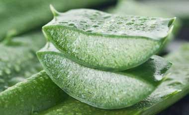 با این گیاهان دارویی سوء هاضمه را درمان کنید!!