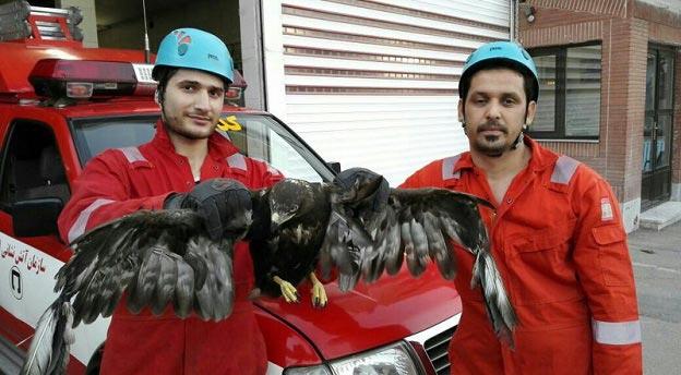 هجوم یک عقاب به استخر خانه ای در مشهد! + عکس
