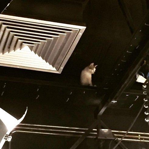 دسته گلی که در پشت صحنه شبکه پنج رخ داد! + عکس