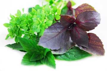 مسمومیت غذایی را با این داروهای خانگی درمان کنید