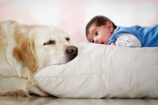 funny-dog-and-color-12