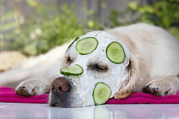 funny-dog-and-color-13