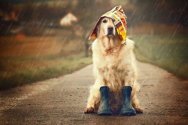 funny-dog-and-color-2