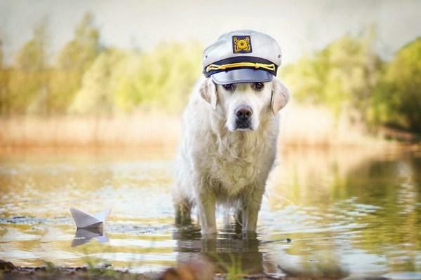 عکس دیدنی از سگ های بامزه و رنگی