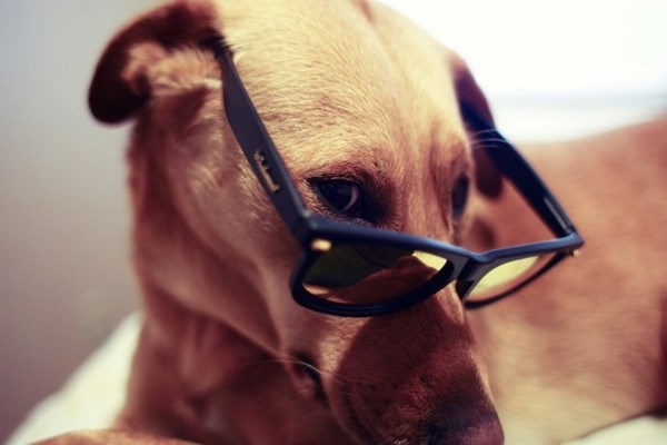 funny-dog-and-color-6