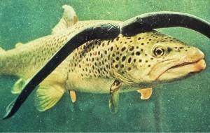 ماهی خونخوار + عکس