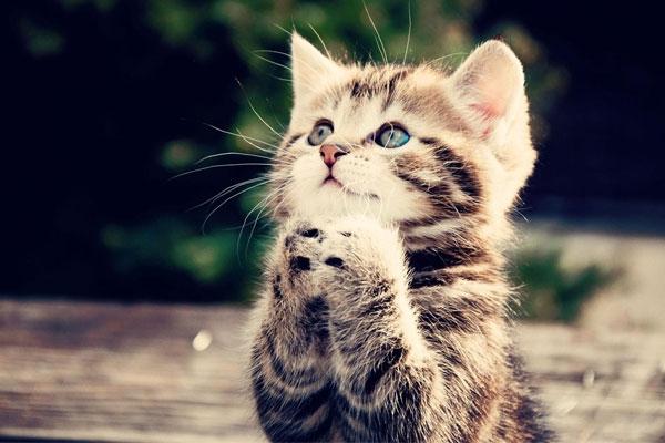 نکات مهم برای نگهداری گربه خانگی