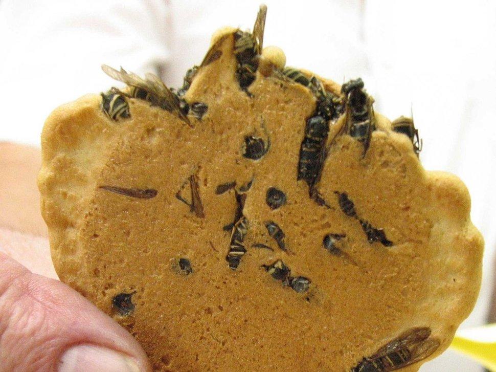 ارزش غذایی حشرات چند برابر گوشت قرمز
