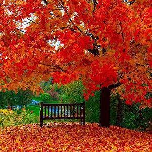 اس ام اس های عاشقانه و پاییزی