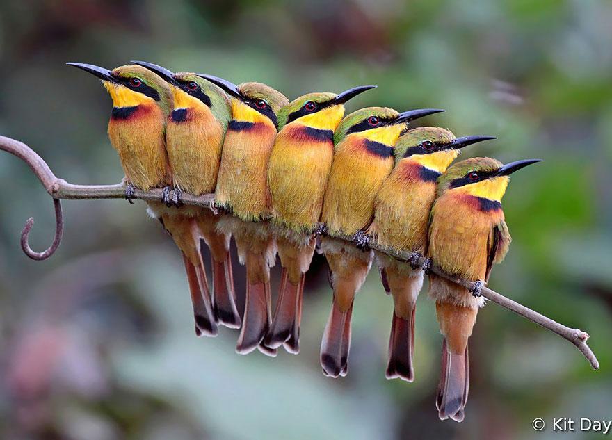 روش پرندگان برای فرار از سرما