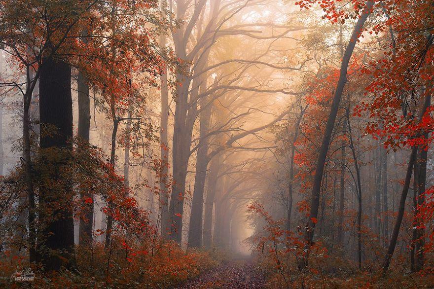 تصاویر زیبا از پاییز