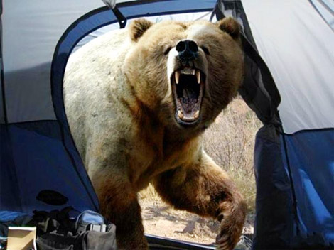آخرین عکس عکاس قبل از خورده شدن توسط خرس!