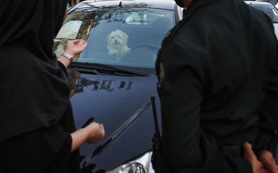 تصاویر دختران راننده تهرانی بدحجاب در خیابانهای تهران
