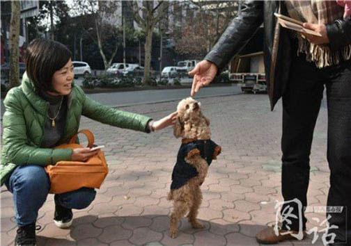 سگی که روی دوپایش راه میرود+عکس
